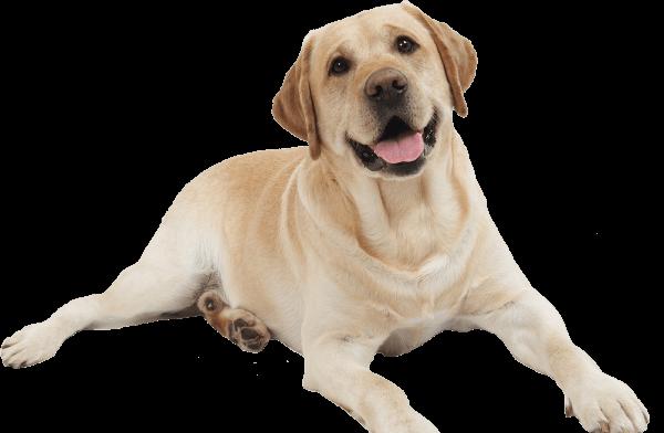 Tabletki na stawy dla psów