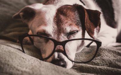 Witaminy dla starego psa. Jakie suplementy i leki na stawy dla psa seniora?